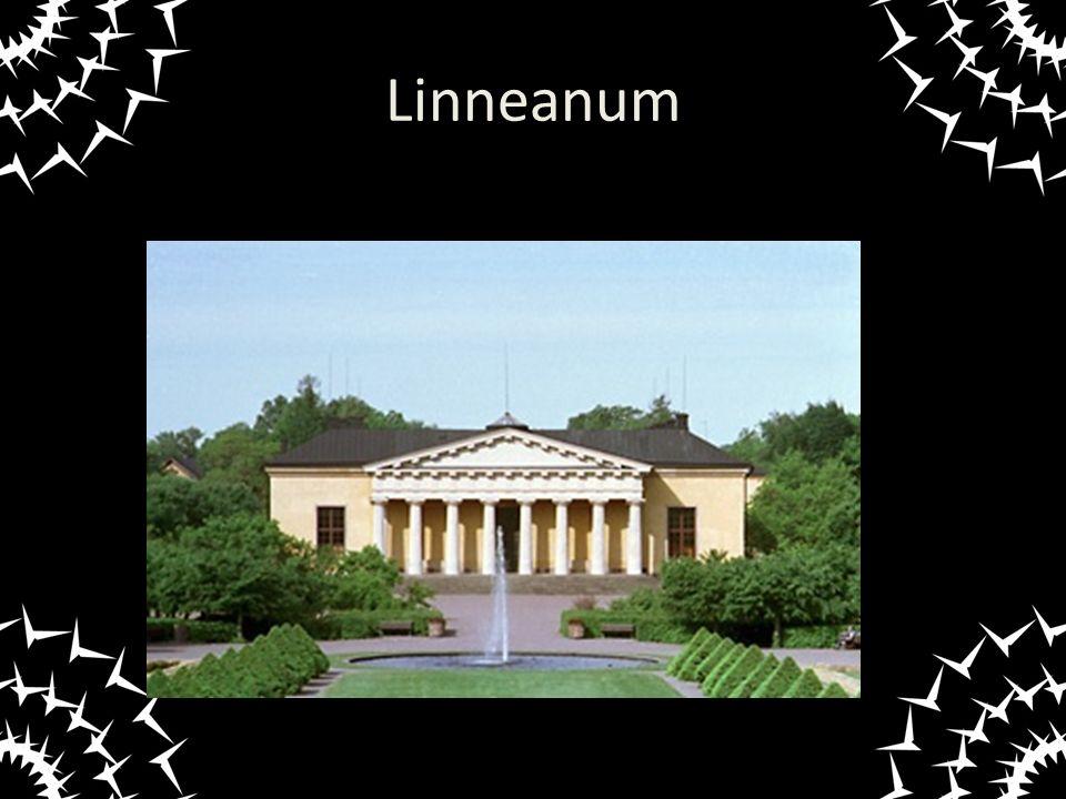Linneanum