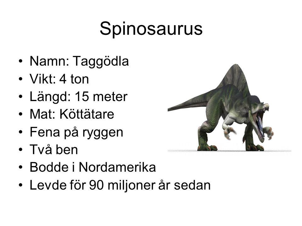 Spinosaurus Namn: Taggödla Vikt: 4 ton Längd: 15 meter Mat: Köttätare Fena på ryggen Två ben Bodde i Nordamerika Levde för 90 miljoner år sedan