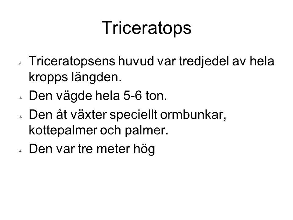 Triceratops  Triceratopsens huvud var tredjedel av hela kropps längden.  Den vägde hela 5-6 ton.  Den åt växter speciellt ormbunkar, kottepalmer oc