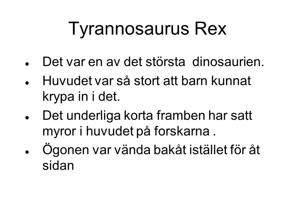 Tyrannosaurus Rex Det var en av det största dinosaurien. Huvudet var så stort att barn kunnat krypa in i det. Det underliga korta framben har satt myr