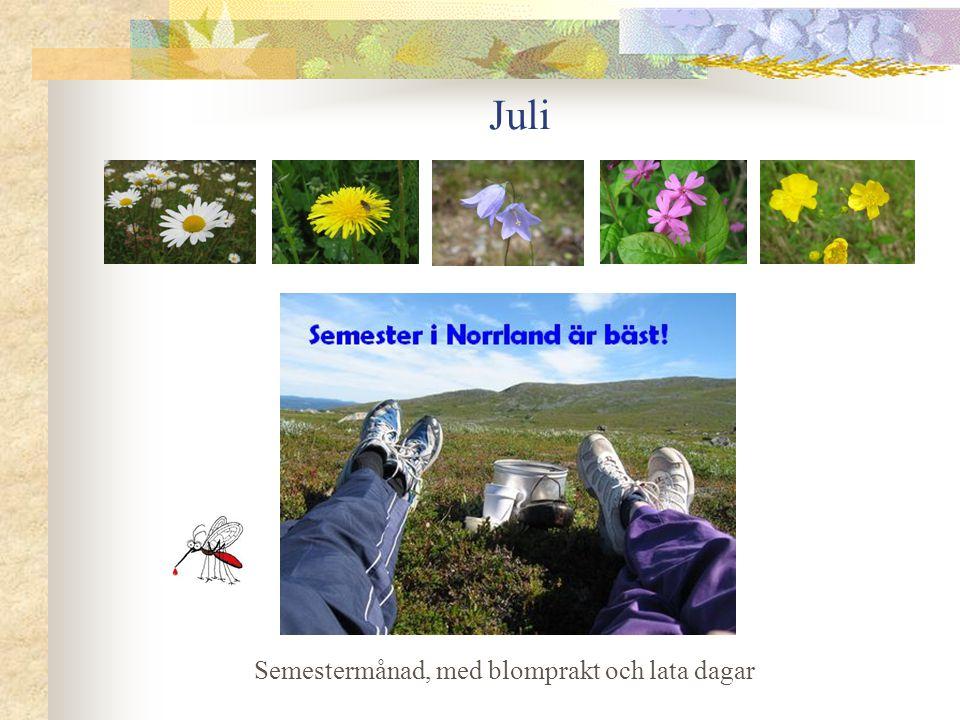 Juli Semestermånad, med blomprakt och lata dagar