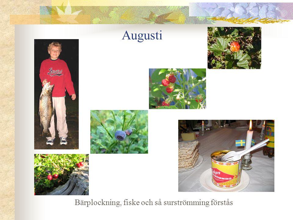 Augusti Bärplockning, fiske och så surströmming förstås