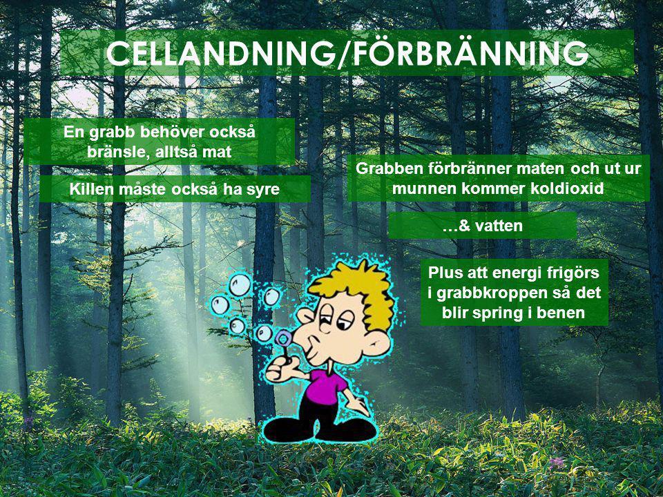 CELLANDNING/FÖRBRÄNNING Alltså.