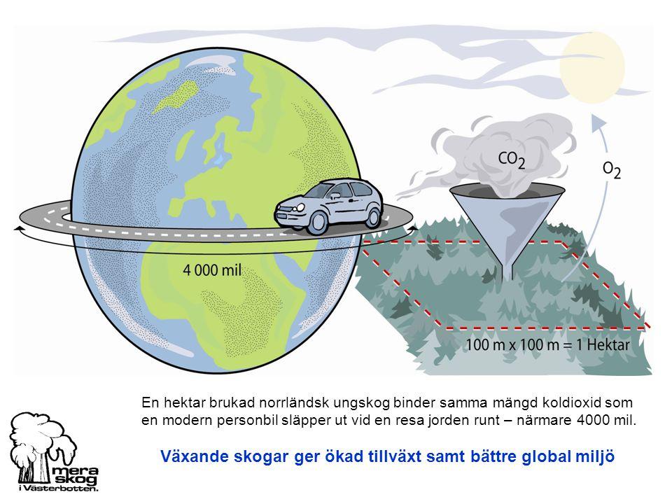 Växande skogar ger ökad tillväxt samt bättre global miljö En hektar brukad norrländsk ungskog binder samma mängd koldioxid som en modern personbil släpper ut vid en resa jorden runt – närmare 4000 mil.