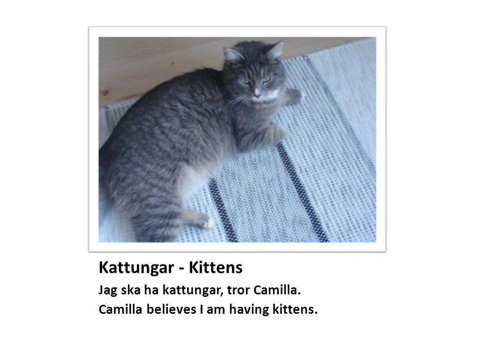 Kattungar - Kittens Jag ska ha kattungar, tror Camilla. Camilla believes I am having kittens.