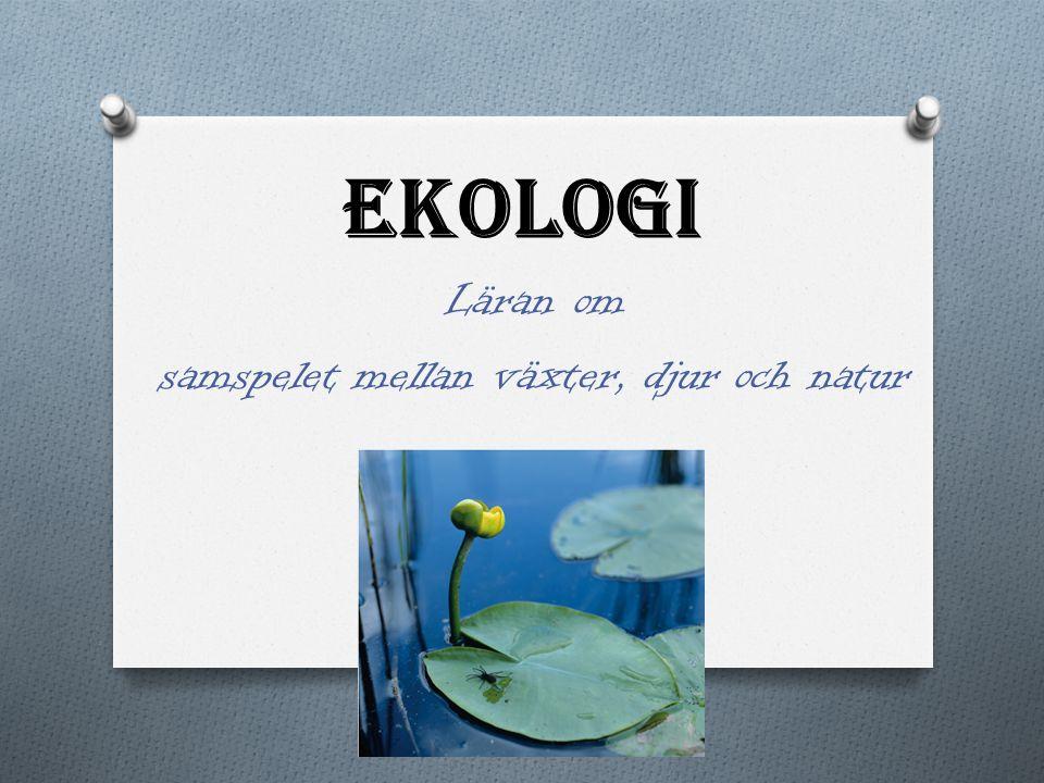 Ekologi – en inledning O Ekosystem O Ett bestämt, avgränsat område (t ex en lövskog, en äng, en sjö, under en viss sten).