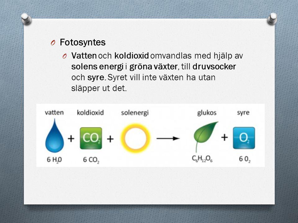 O Fotosyntes O Vatten och koldioxid omvandlas med hjälp av solens energi i gröna växter, till druvsocker och syre. Syret vill inte växten ha utan släp