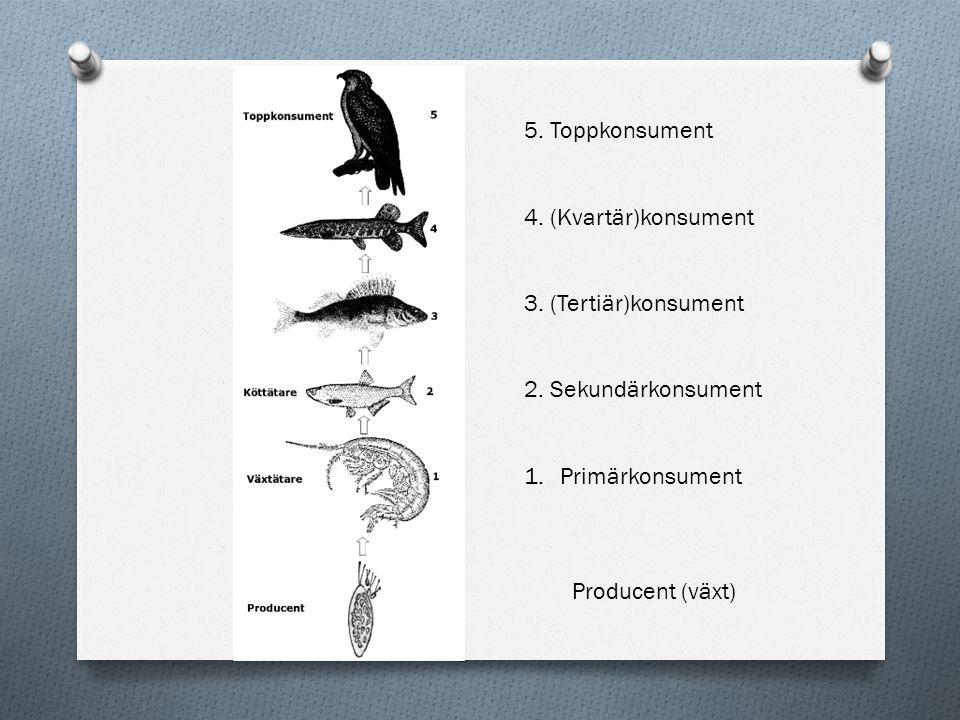 5. Toppkonsument 4. (Kvartär)konsument 3. (Tertiär)konsument 2. Sekundärkonsument 1.Primärkonsument Producent (växt)