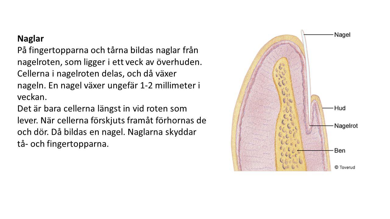 vad består naglar av