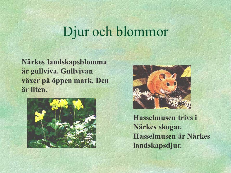 Djur och blommor Närkes landskapsblomma är gullviva. Gullvivan växer på öppen mark. Den är liten. Hasselmusen trivs i Närkes skogar. Hasselmusen är Nä