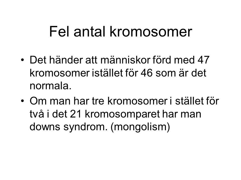 Fel antal kromosomer Det händer att människor förd med 47 kromosomer istället för 46 som är det normala. Om man har tre kromosomer i stället för två i
