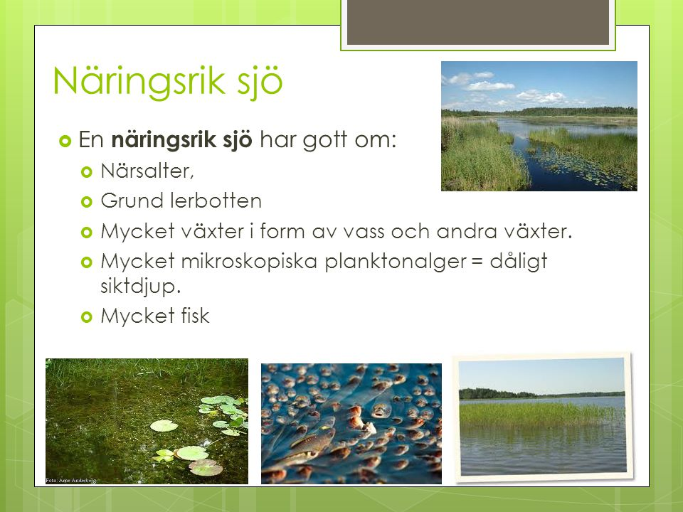 Näringsrik sjö  En näringsrik sjö har gott om:  Närsalter,  Grund lerbotten  Mycket växter i form av vass och andra växter.  Mycket mikroskopiska
