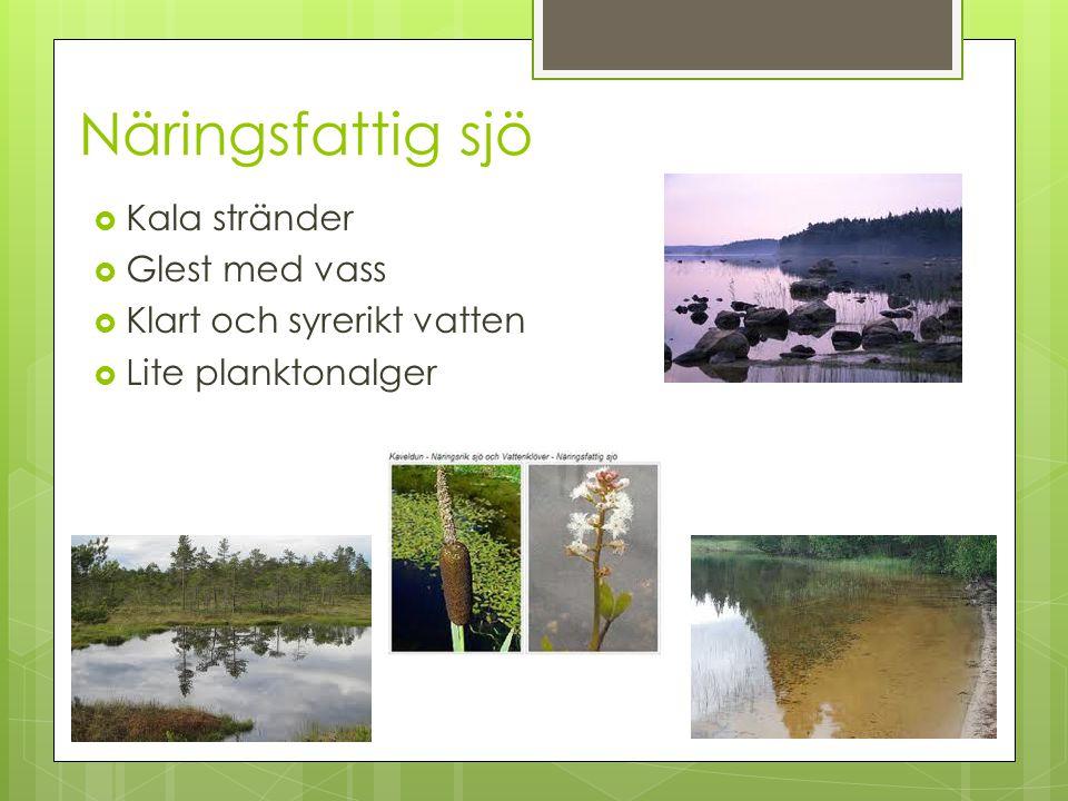 Näringsfattig sjö  Kala stränder  Glest med vass  Klart och syrerikt vatten  Lite planktonalger