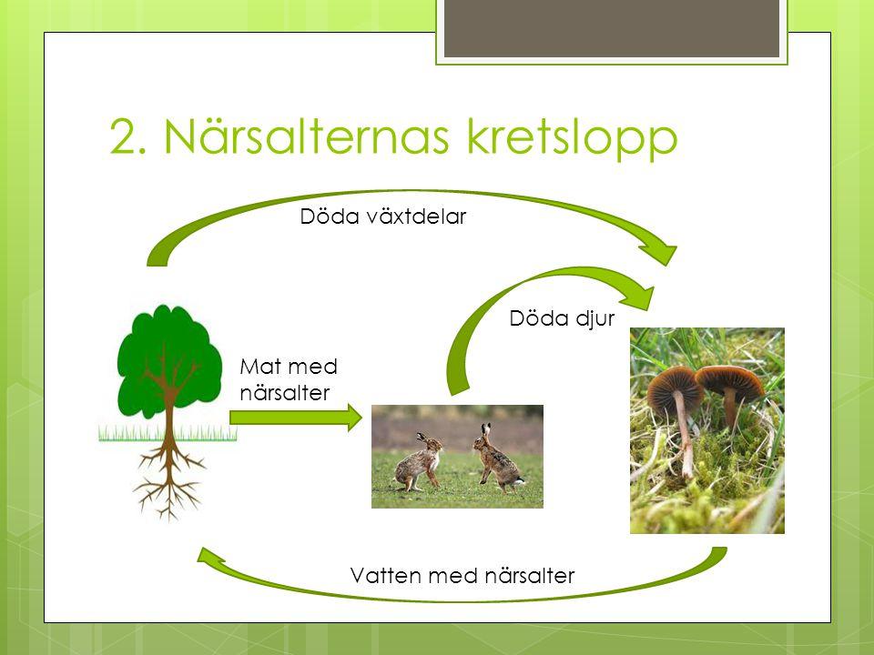 2. Närsalternas kretslopp Döda växtdelar Döda djur Mat med närsalter Vatten med närsalter