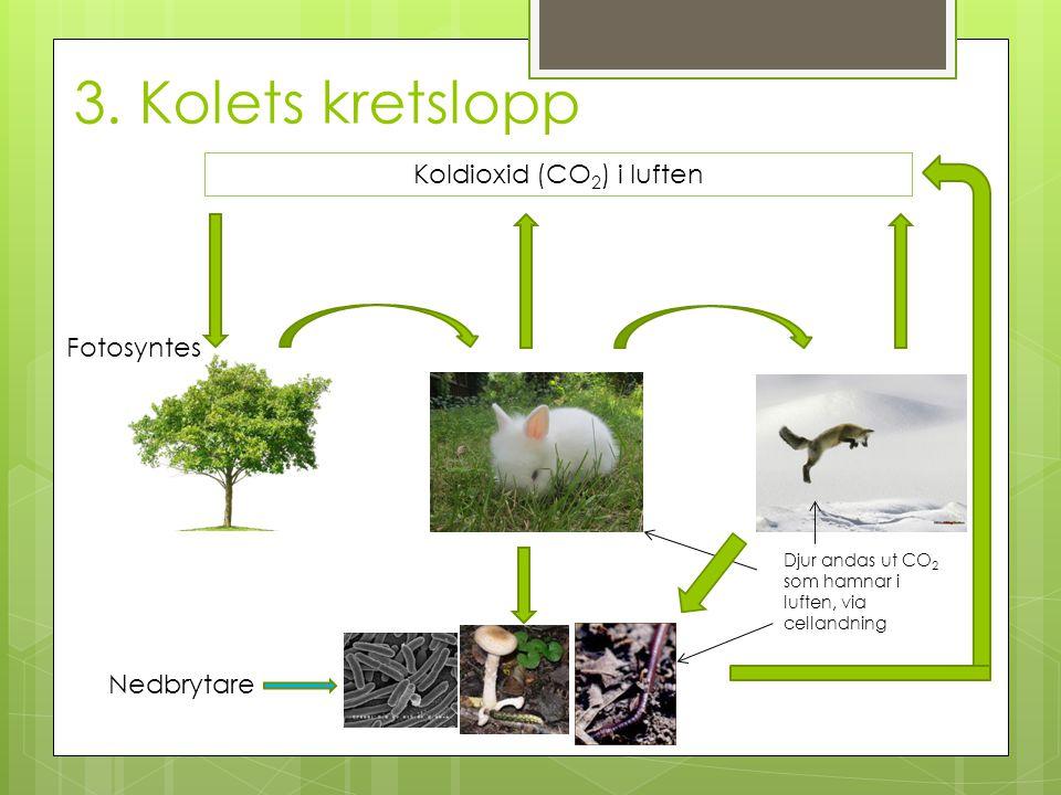 3. Kolets kretslopp Nedbrytare Koldioxid (CO 2 ) i luften Fotosyntes Djur andas ut CO 2 som hamnar i luften, via cellandning