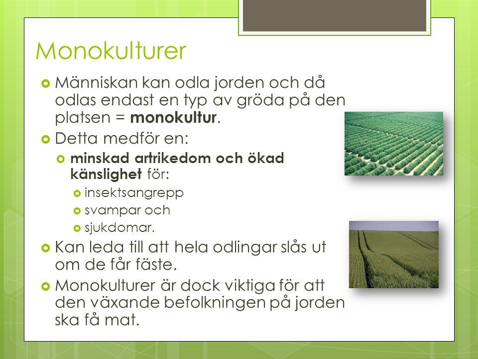 Monokulturer  Människan kan odla jorden och då odlas endast en typ av gröda på den platsen = monokultur.  Detta medför en:  minskad artrikedom och