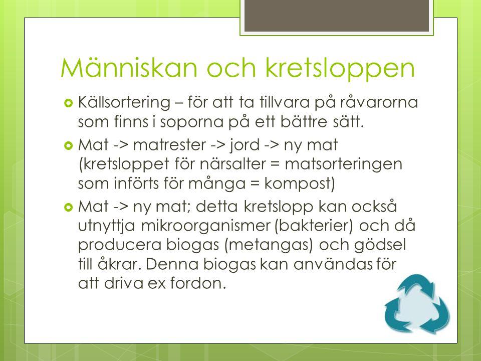 Människan och kretsloppen  Källsortering – för att ta tillvara på råvarorna som finns i soporna på ett bättre sätt.  Mat -> matrester -> jord -> ny