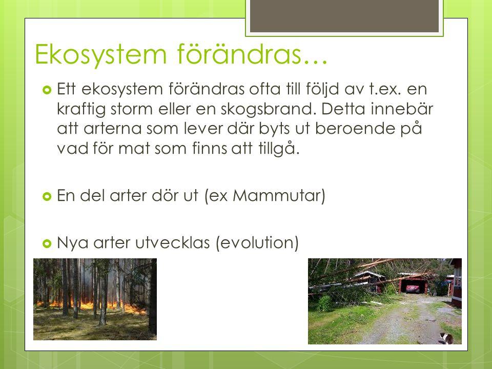Ekosystem förändras…  Ett ekosystem förändras ofta till följd av t.ex. en kraftig storm eller en skogsbrand. Detta innebär att arterna som lever där