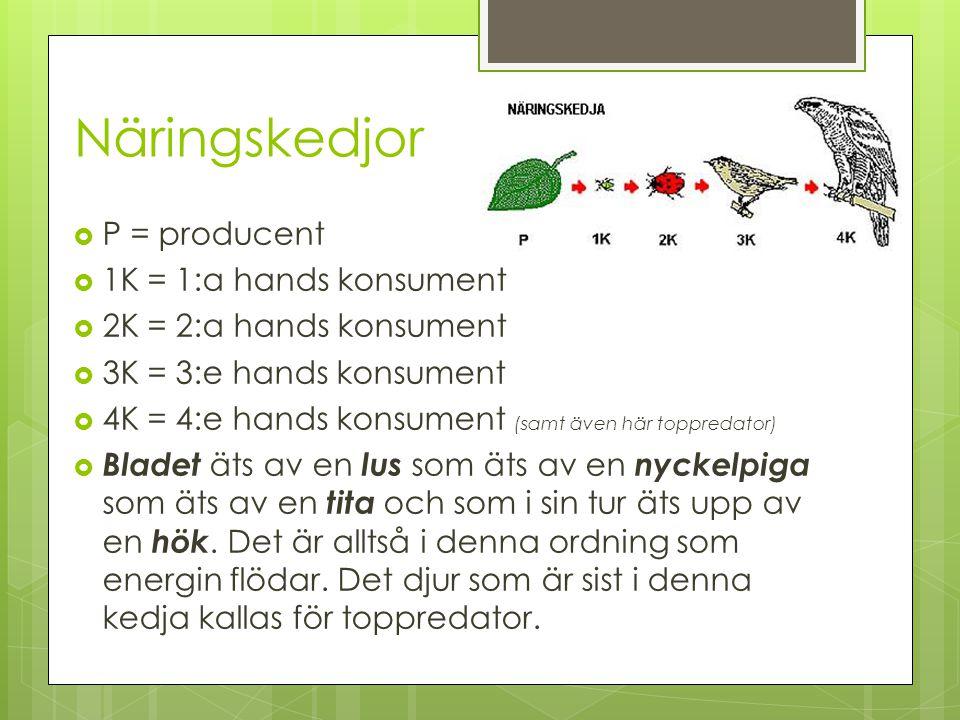 Näringskedjor  P = producent  1K = 1:a hands konsument  2K = 2:a hands konsument  3K = 3:e hands konsument  4K = 4:e hands konsument (samt även h