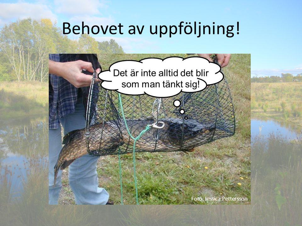 Behovet av uppföljning! Foto: Jessica Pettersson