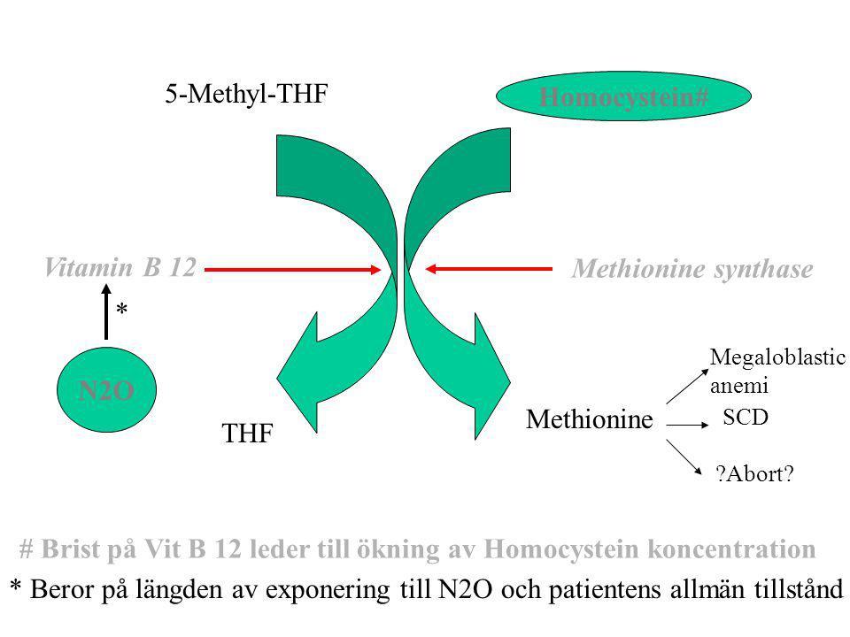 5-Methyl-THF THF Methionine Methionine synthase Vitamin B 12 Homocystein# # Brist på Vit B 12 leder till ökning av Homocystein koncentration N2O * * B