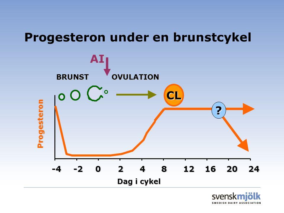 Progesteron under en brunstcykel BRUNSTOVULATION AI -4-2024812162024 Dag i cykel Progesteron ? CL