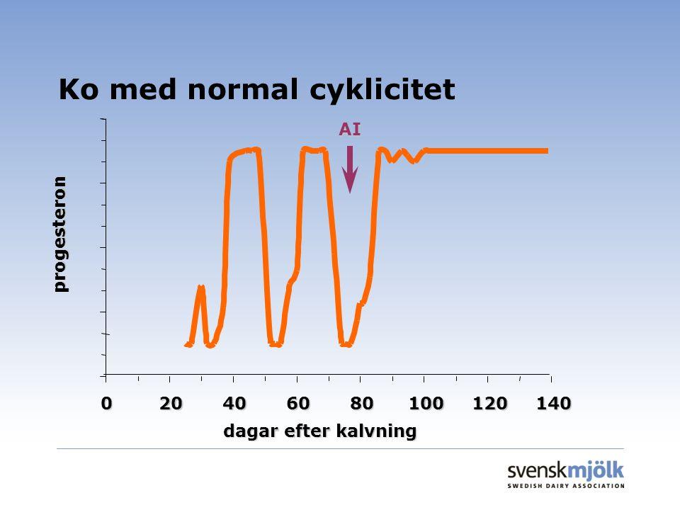 Ko med normal cyklicitet 020406080100120140 dagar efter kalvning progesteron AI