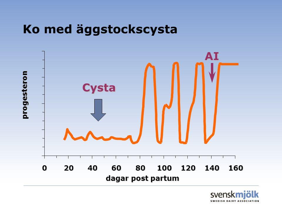 Ko med äggstockscysta 020406080100120140160 dagar post partum progesteron AI Cysta