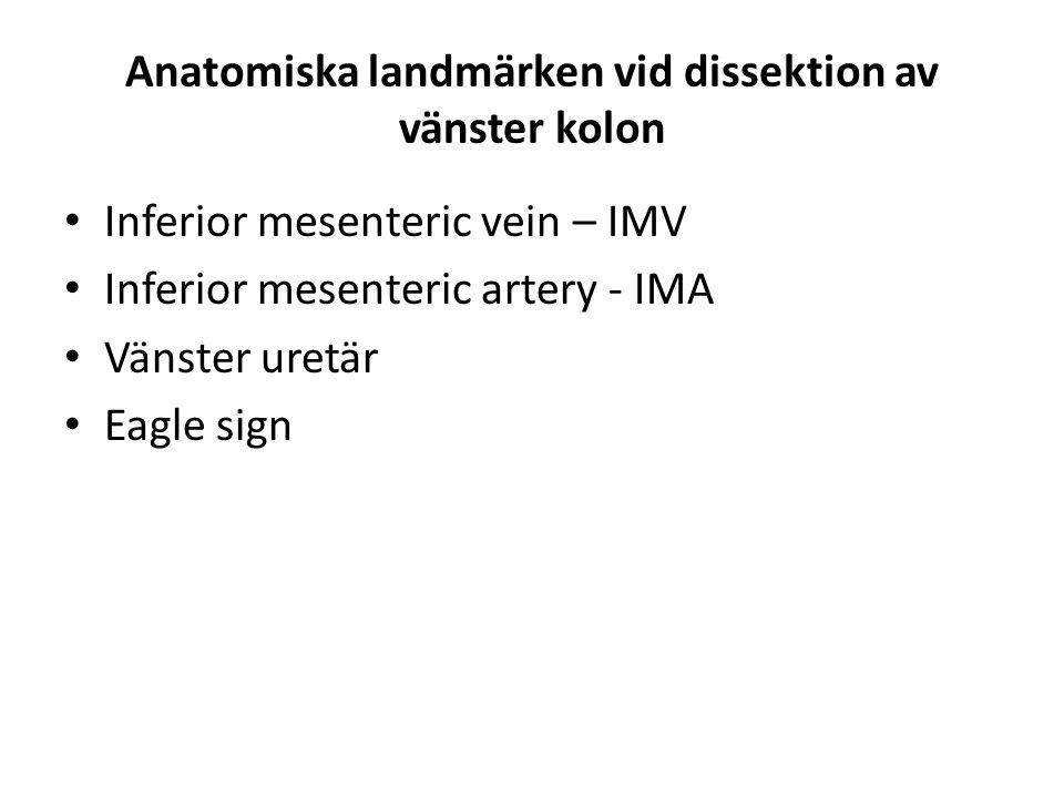 Anatomiska landmärken vid dissektion av vänster kolon Inferior mesenteric vein – IMV Inferior mesenteric artery - IMA Vänster uretär Eagle sign