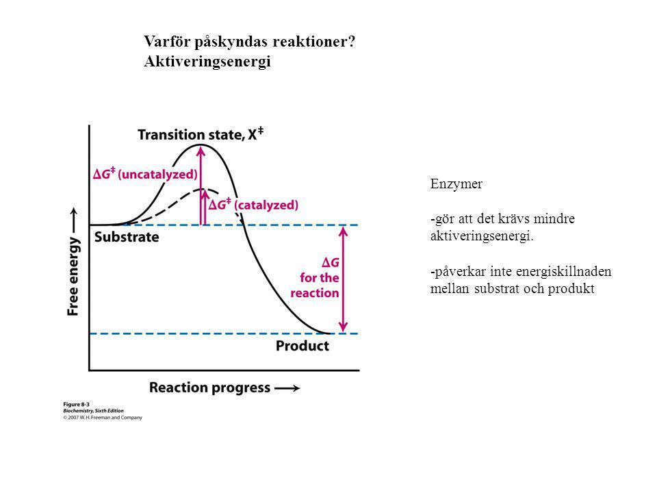 Varför påskyndas reaktioner? Aktiveringsenergi Enzymer -gör att det krävs mindre aktiveringsenergi. -påverkar inte energiskillnaden mellan substrat oc