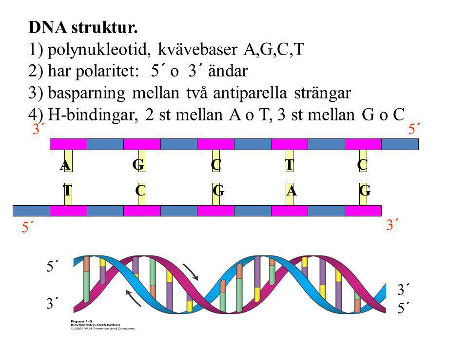 5´ 3´ A G C T C T C G A G 5´ 3´ 5´ DNA struktur. 1) polynukleotid, kvävebaser A,G,C,T 2) har polaritet: 5´ o 3´ ändar 3) basparning mellan två antipar