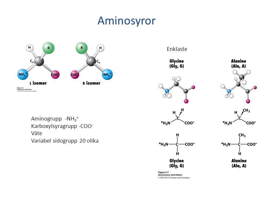 Aminosyror Aminogrupp -NH 3 + Karboxylsyragrupp -COO - Väte Variabel sidogrupp 20 olika Enklaste