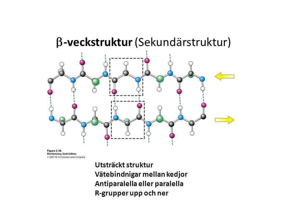  -veckstruktur (Sekundärstruktur) Utsträckt struktur Vätebindnigar mellan kedjor Antiparalella eller paralella R-grupper upp och ner
