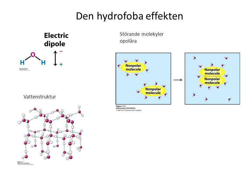Den hydrofoba effekten Vattenstruktur Störande molekyler opolära