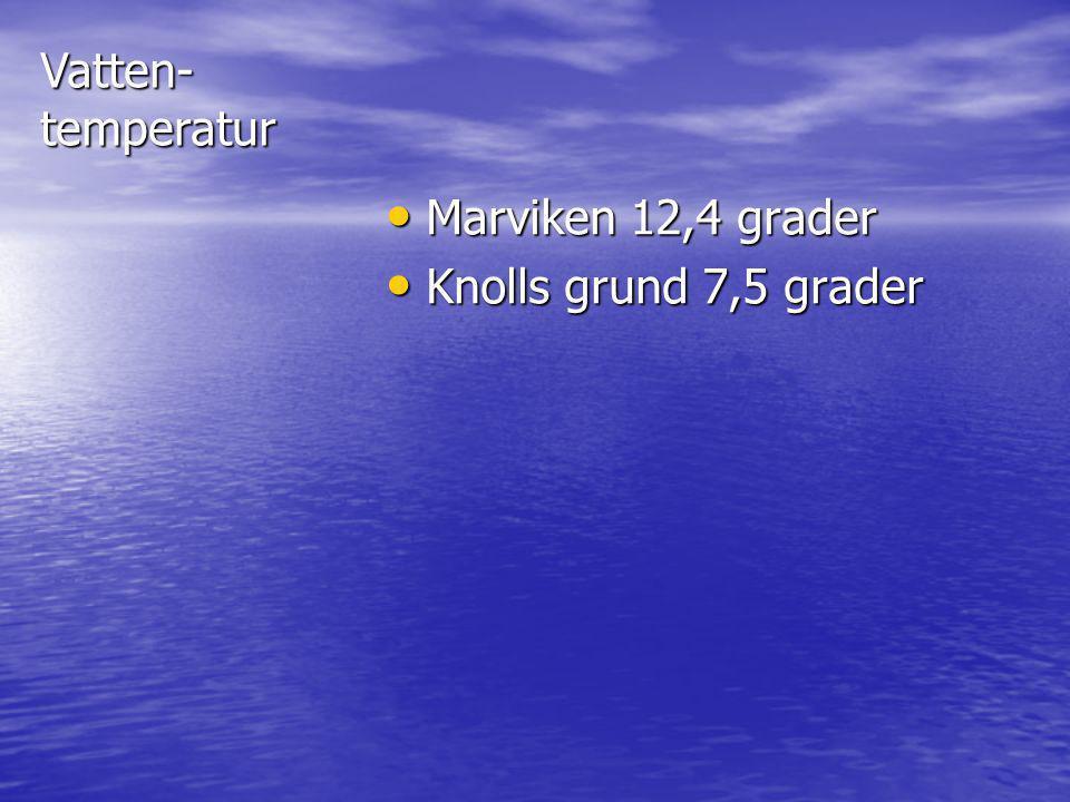 Vatten-temperatur Marviken 12,4 grader Marviken 12,4 grader Knolls grund 7,5 grader Knolls grund 7,5 grader