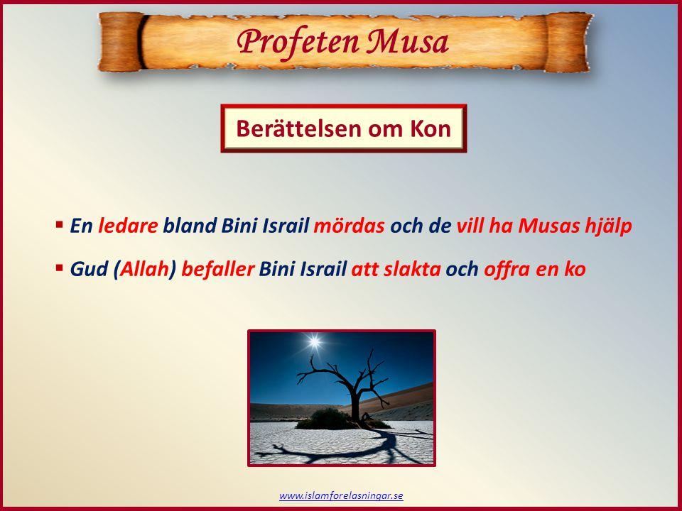 www.islamforelasningar.se Berättelsen om Kon Profeten Musa  En ledare bland Bini Israil mördas och de vill ha Musas hjälp  Gud (Allah) befaller Bini Israil att slakta och offra en ko