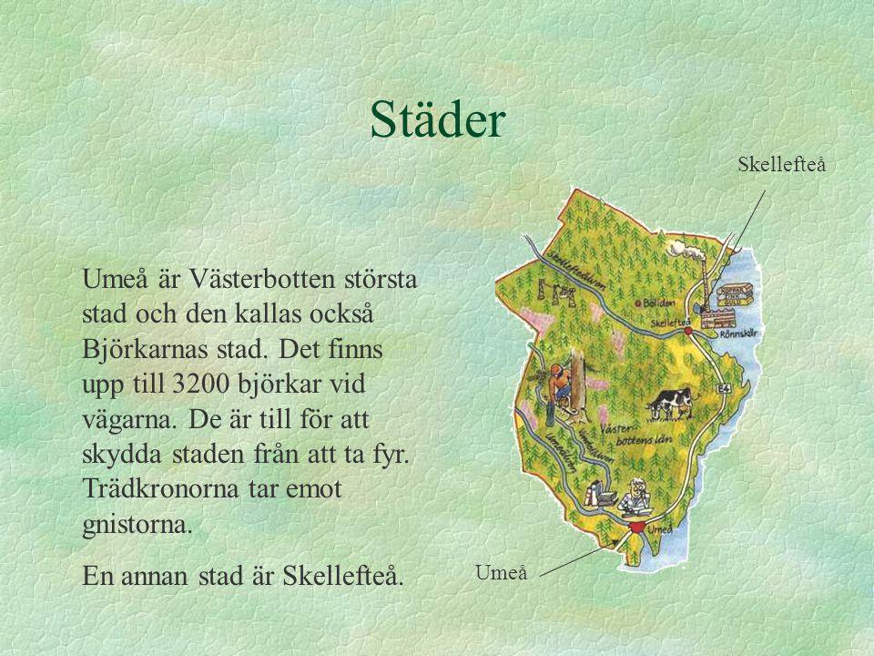 Kända platser I Västerbotten finns tre älvar som heter Vindel älven, Ume älven och Skellefte älv.