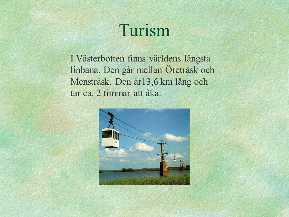 Turism I Västerbotten finns världens längsta linbana.
