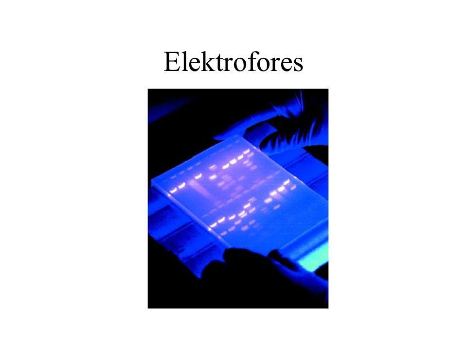Elektrofores