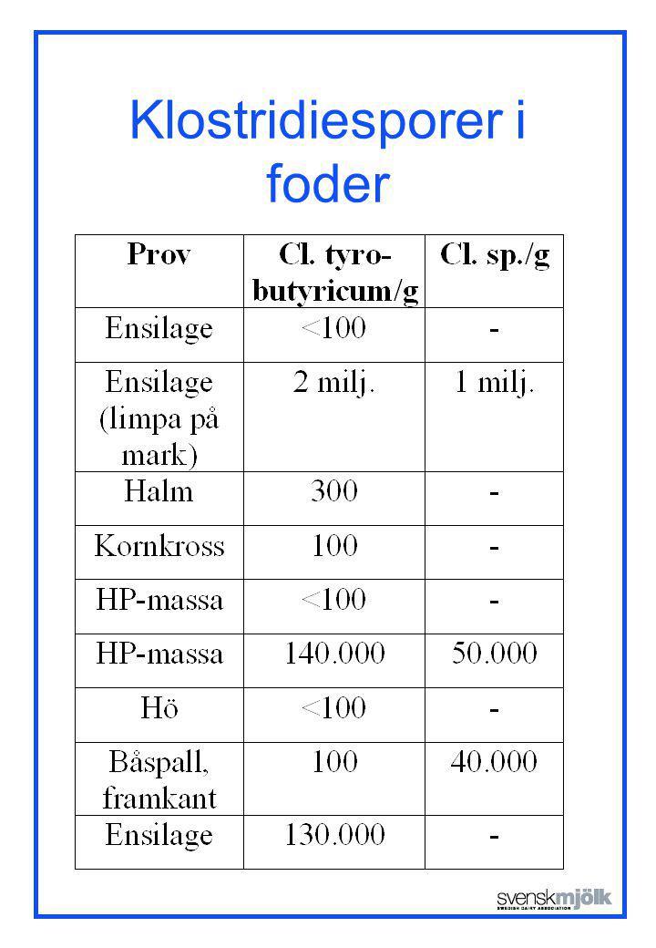 Klostridiesporer i foder