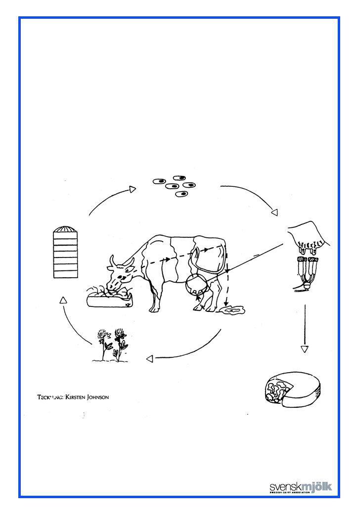 Samband mellan sporer i gödsel och mjölk på en gård