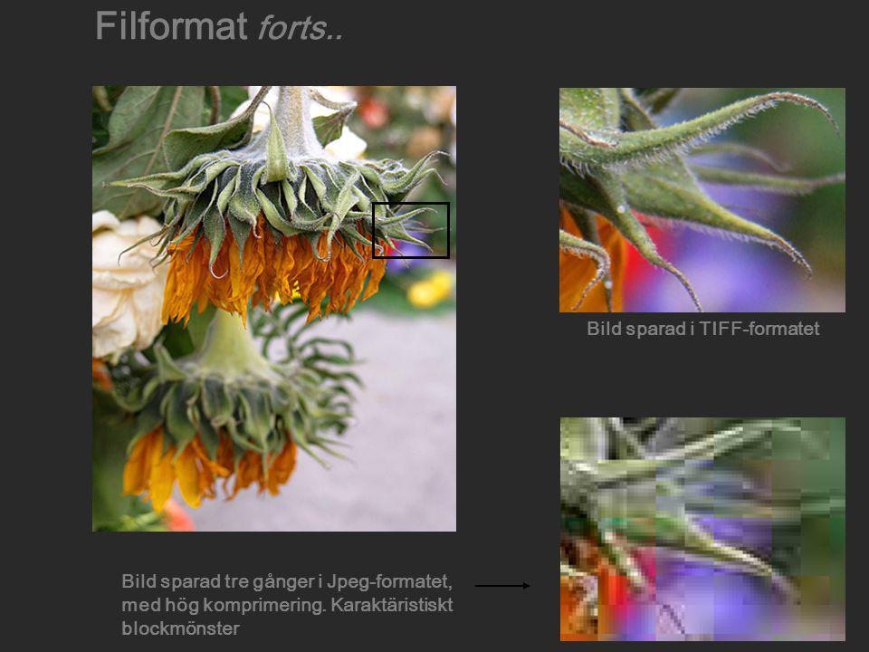 Bild sparad i TIFF-formatet Bild sparad tre gånger i Jpeg-formatet, med hög komprimering. Karaktäristiskt blockmönster