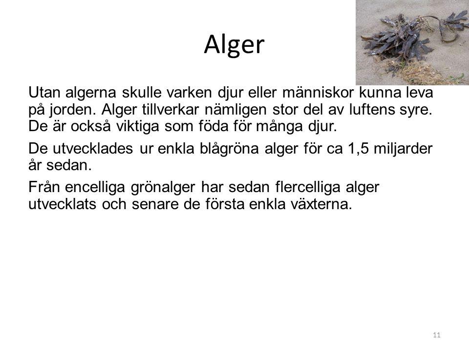 Alger Utan algerna skulle varken djur eller människor kunna leva på jorden. Alger tillverkar nämligen stor del av luftens syre. De är också viktiga so
