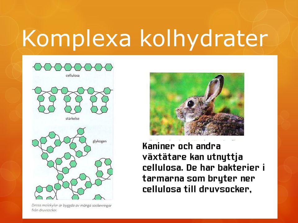 Komplexa kolhydrater