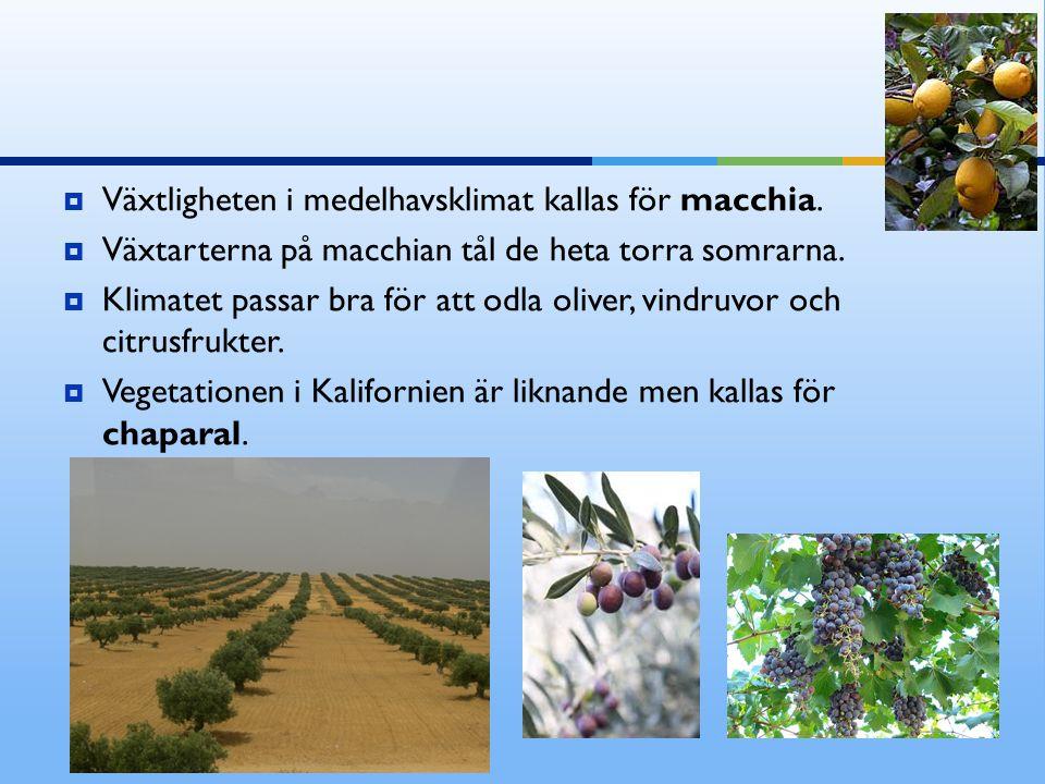 Växtligheten i medelhavsklimat kallas för macchia.  Växtarterna på macchian tål de heta torra somrarna.  Klimatet passar bra för att odla oliver,