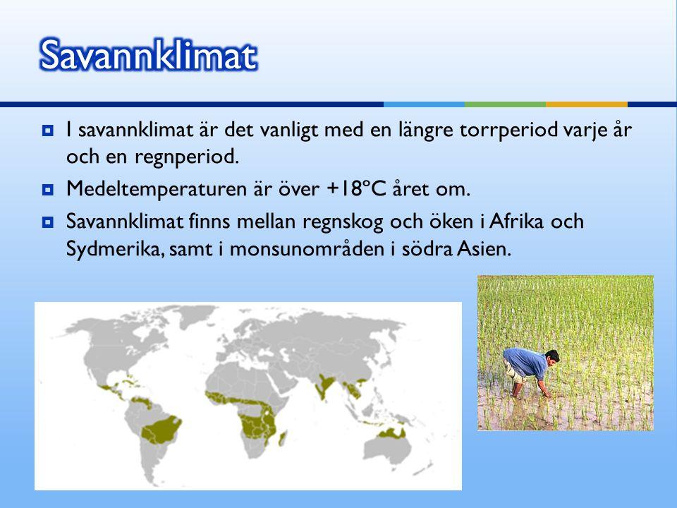  I savannklimat är det vanligt med en längre torrperiod varje år och en regnperiod.  Medeltemperaturen är över +18ºC året om.  Savannklimat finns m
