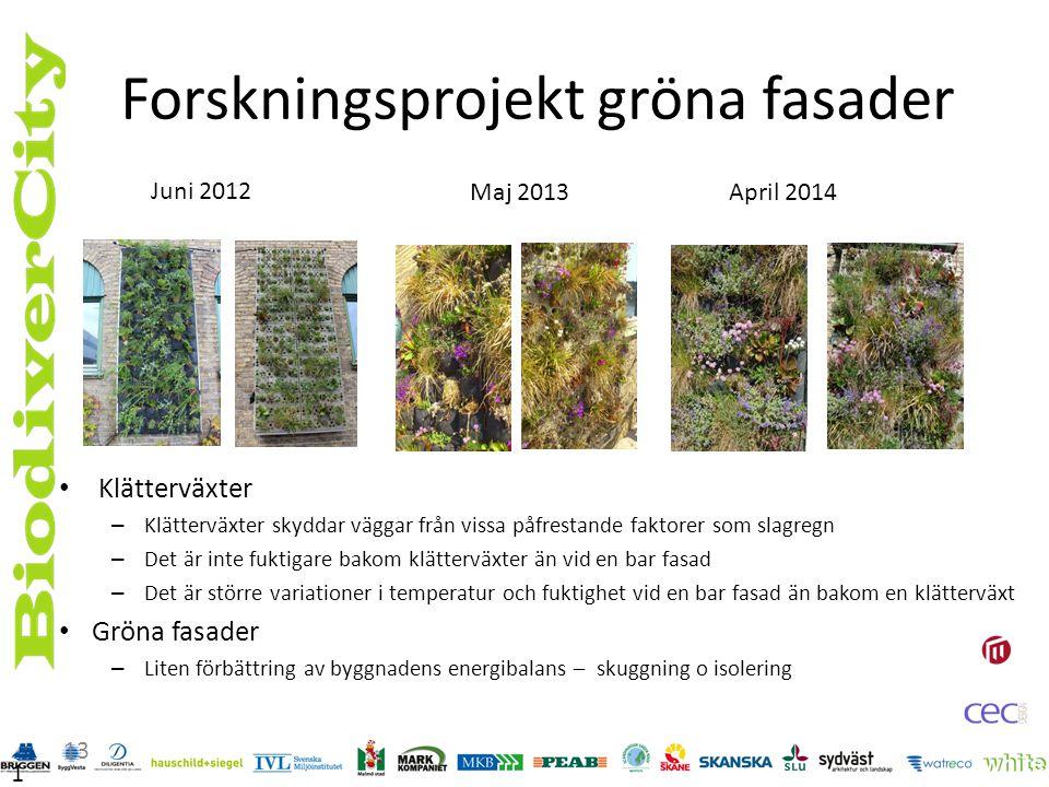 Erfarenheter av levande väggar Erfarenheter av att planera, bygga och underhålla en levande vägg i Sverige idag.