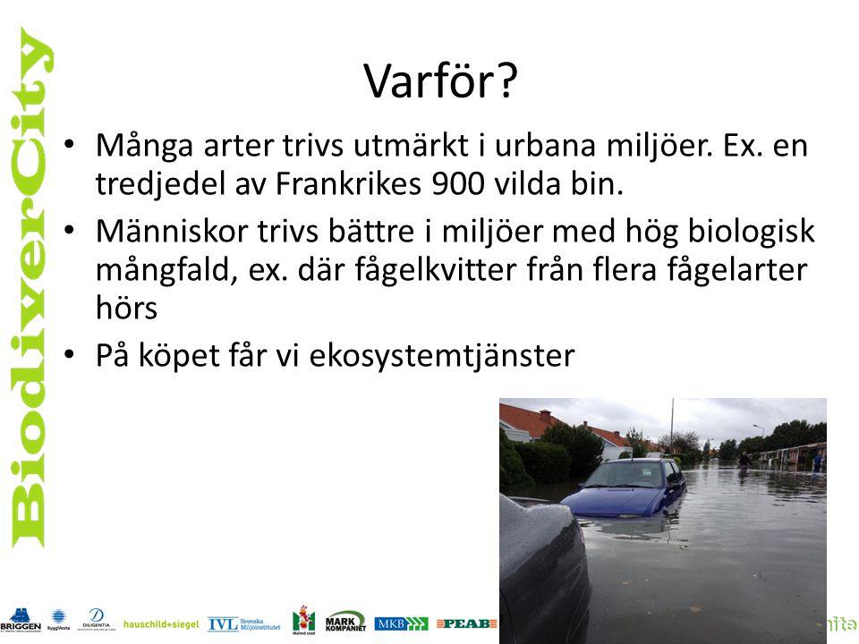 Konstellation Grönyta Byggföretag Arkitekt Entreprenör Förvaltare Innovatör Kommun/ region Forskare Ekolog Landskaps- arkitekt