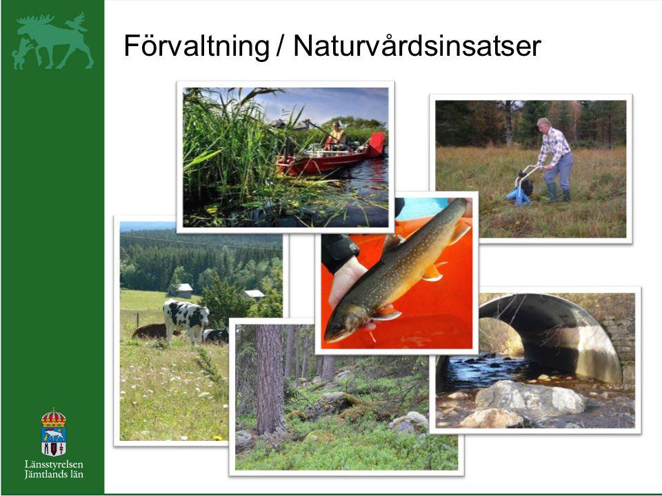 Förvaltning / Naturvårdsinsatser