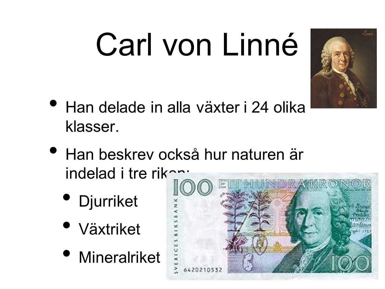 Carl von Linné Han delade in alla växter i 24 olika klasser. Han beskrev också hur naturen är indelad i tre riken: Djurriket Växtriket Mineralriket
